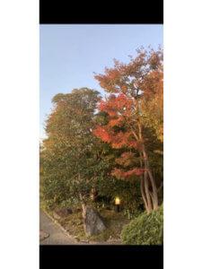 食欲の秋♪